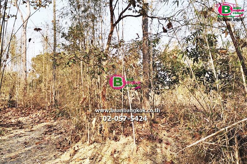 ขาย ที่ดินเปล่า เนื้อที่ 1 ไร่ ใกล้โรงเรียนวัดน้ำบ่อหลวง อ.สันป่าตอง จ.เชียงใหม่