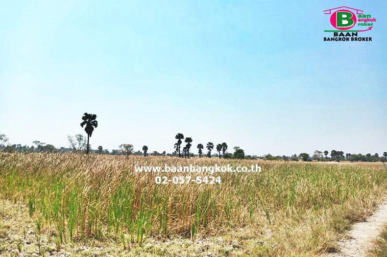 ขาย ที่ดินเปล่า เนื้อที่ 13-1-32 ไร่ ใกล้อ่างเก็บน้ำแก้มลิงบึงพุดซา อ.โนนไทย จ.นครราชสีมา
